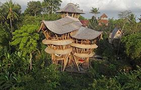 Бамбуковый рай Элоры Харди